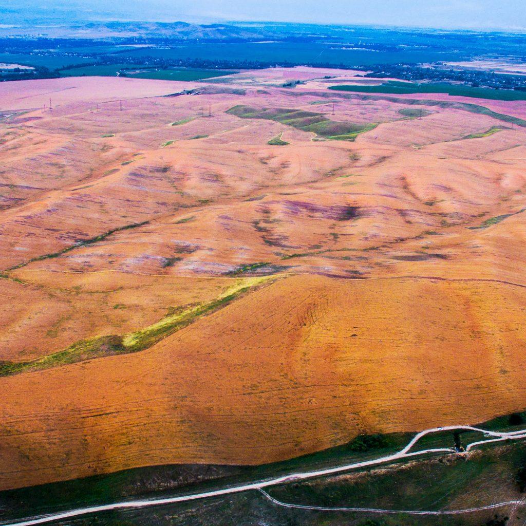 Пшеничные поля в Чуйской долине